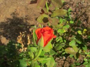 Blossom of hope